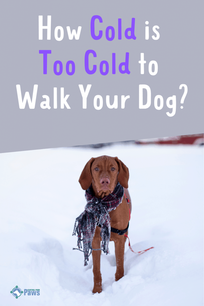 How Cold is Too Cold to Walk Your Dog in Winter Snow Pinterest