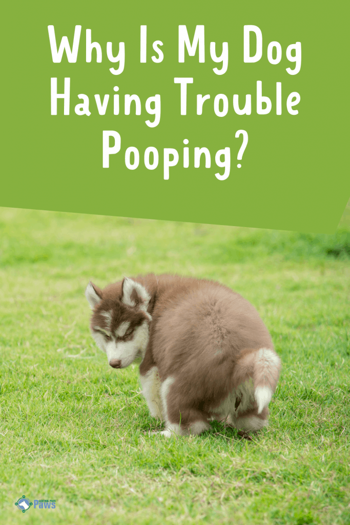 Why Is My Dog Having Trouble Pooping Pinterest