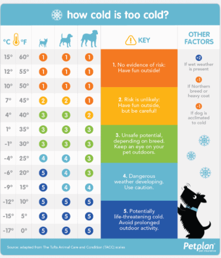 PetPlan chart temperature too cold to walk dog in winter