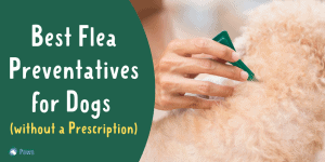 Best Flea Medicine for Dogs without Vet Prescription