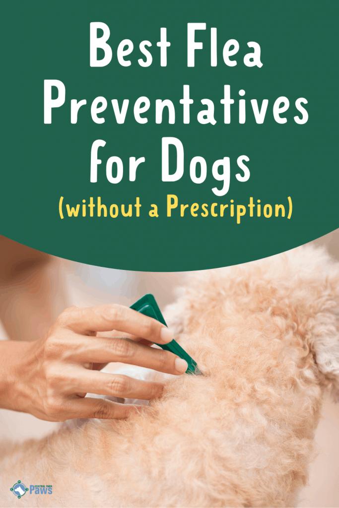 Best Flea Medicine for Dogs without Vet Prescription Pinterest