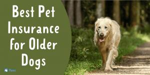 Best Pet Insurance for Older Dogs and Seniors