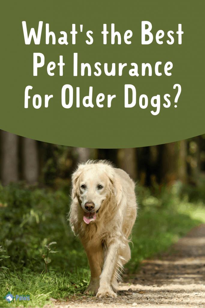 Best Pet Insurance for Older Dogs and Seniors Pinterest