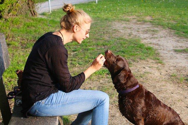 Comfortis NexGard easy to give chewable flea control meds