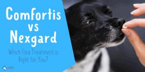 Comfortis vs Nexgard Flea Medications for Dogs