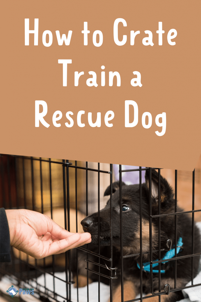 How to Crate Train a Rescue Dog Pinterest
