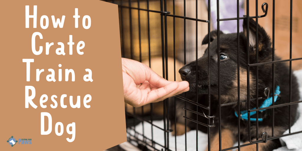 How to Crate Train a Rescue Dog