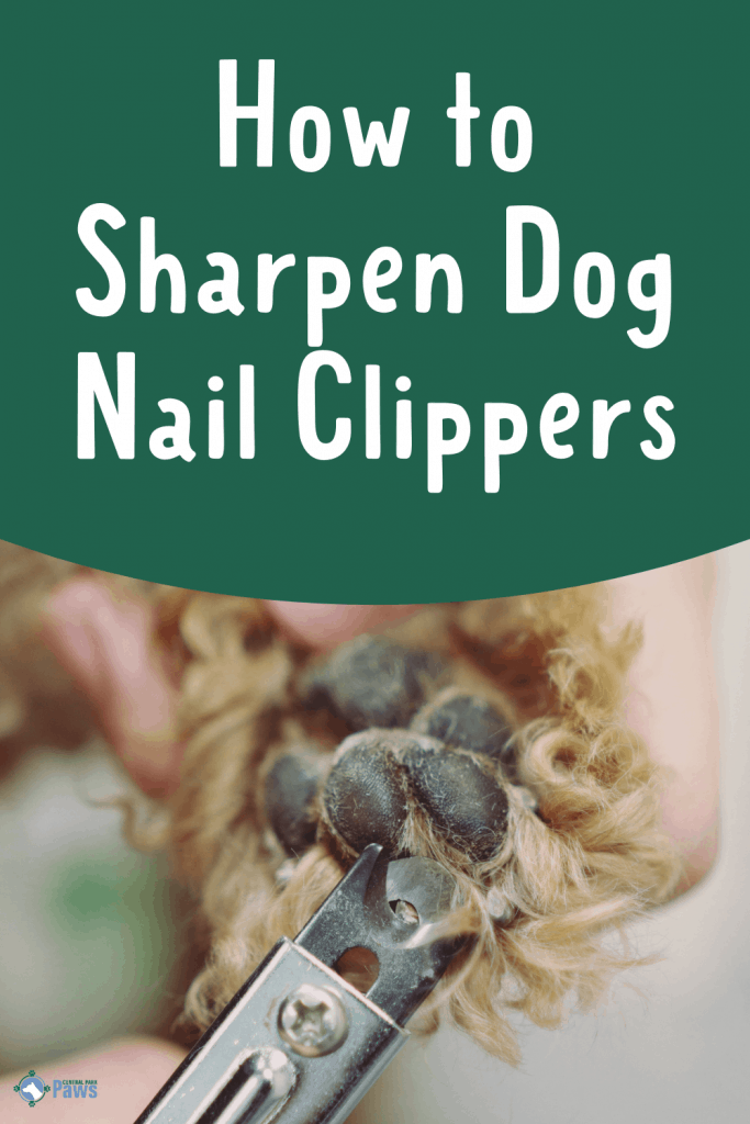 How to Sharpen Dog Nail Clippers Pinterest