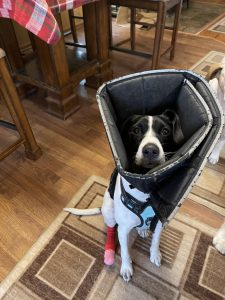 Cone of shame after nail clipping
