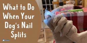 What to Do When Your Dog's Nail Splits