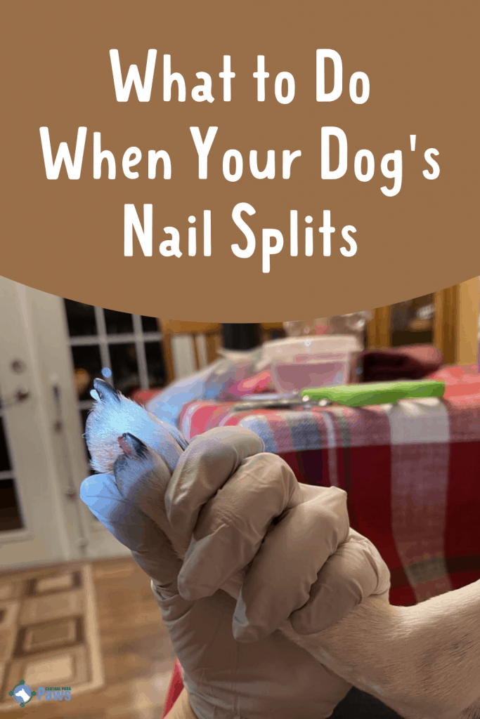 What to Do When Your Dog's Nail Splits Pinterest