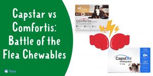 Capstar vs Comfortis Flea Medication Comparison