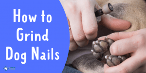 How to Grind Dog Nails at Home Easily