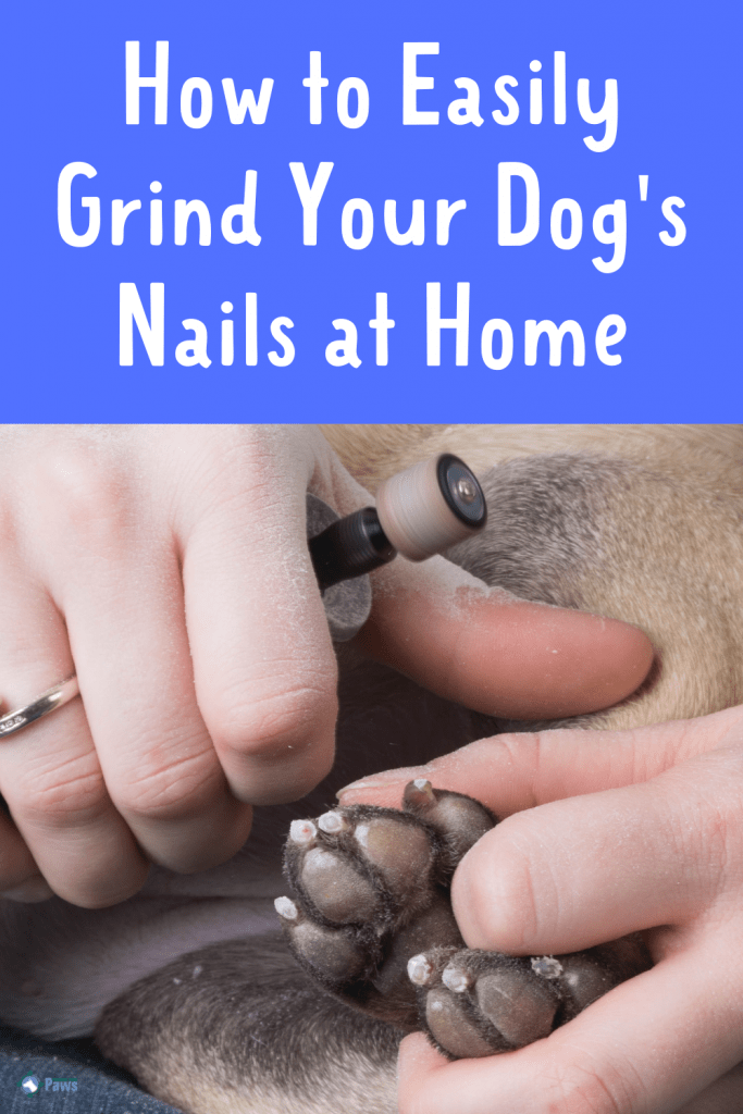 How to Grind Dog Nails at Home Easily - Pinterest