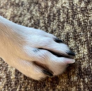 Sophie is a senior and her nails are thicker