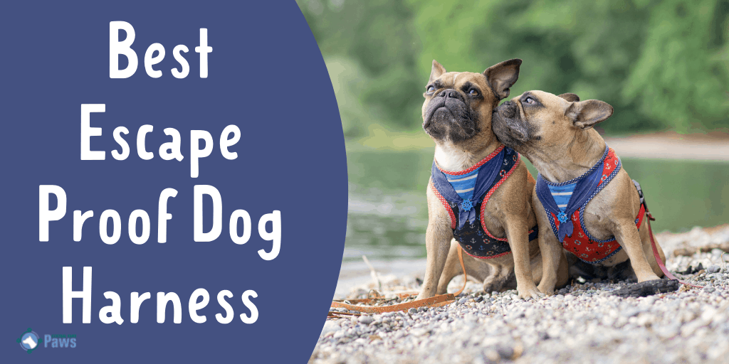 Best Escape Proof Dog Harness for Your Canine Houdini