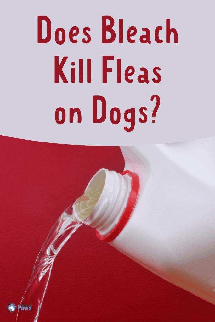 Does Bleach Kill Fleas on Dogs Clean Pest Control - Pinterest
