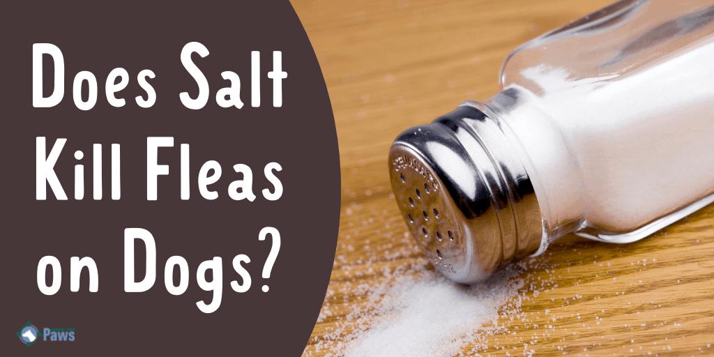 Does Salt Kill Fleas on Dogs