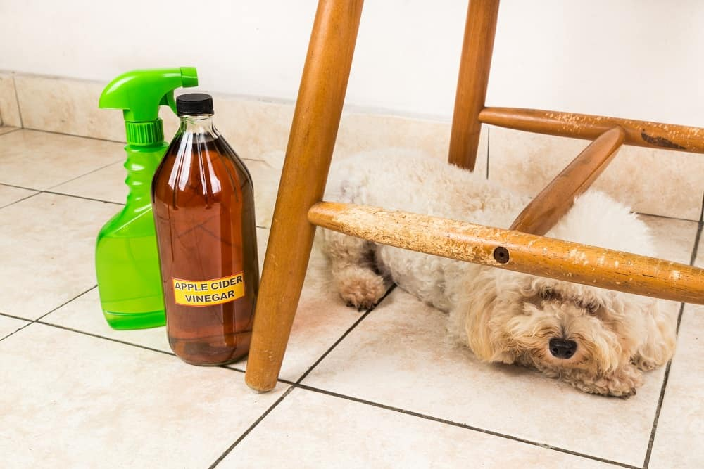 How to use vinegar to repel kill fleas in home on dog