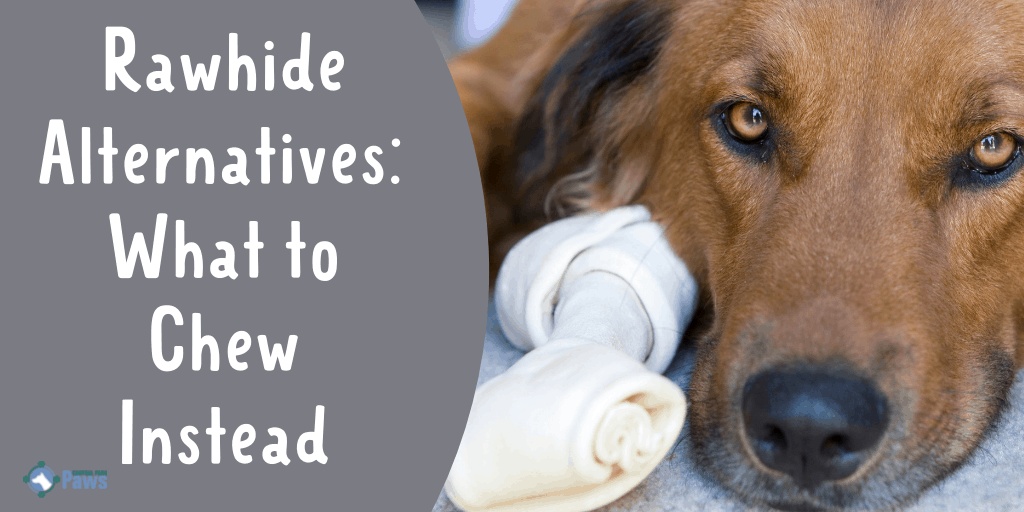 Rawhide Alternatives What to Chew Instead