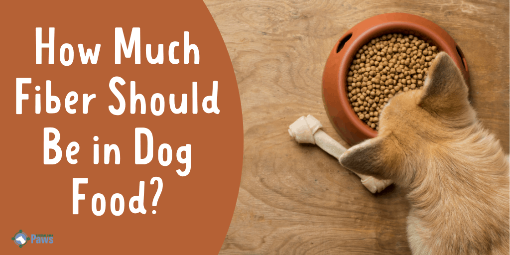 How Much Fiber Should Be in Dog Food
