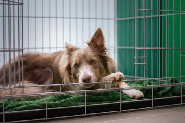 Tips to help rescue dog calmy sleep in new crate home quietly