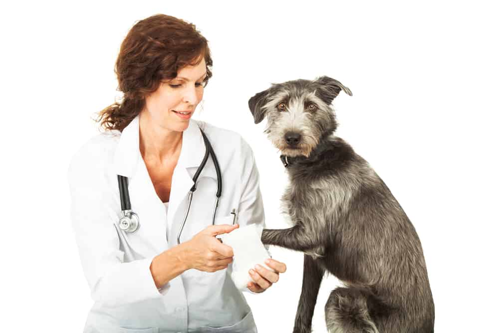 Benefits of Pet Insurance for Older dogs