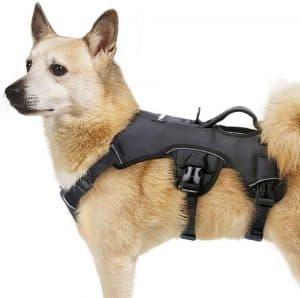 rabbitgoo Escape Proof Dog Harness
