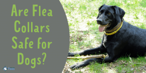 Are Flea Collars Safe for Dogs Should You Use This Flea Treatment