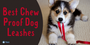 Best Chew Proof Indestructible Dog Leashes