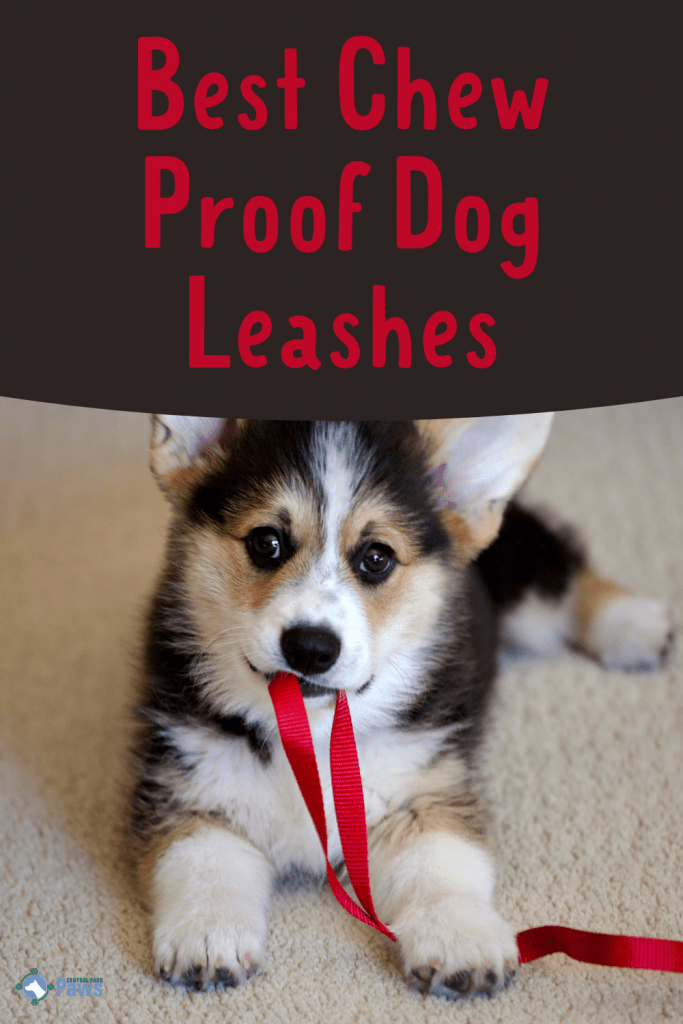 Best Chew Proof Indestructible Dog Leashes - Pinterest