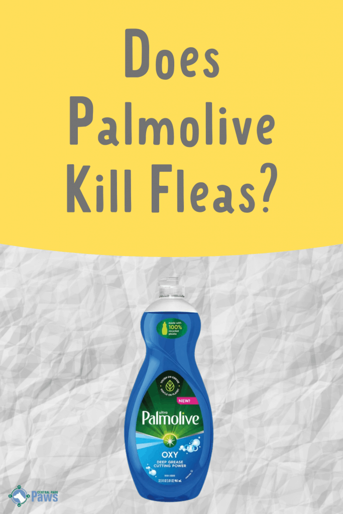 Does Palmolive Kill Fleas and Flea Eggs - Pinterest