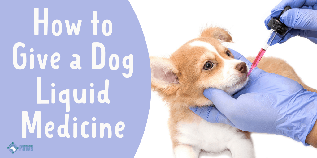 How to Give a Dog Liquid Medicine Easily