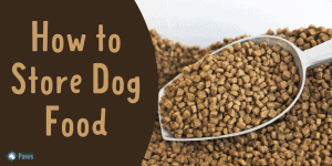 How to Store Dog Food Safely Long term and short term