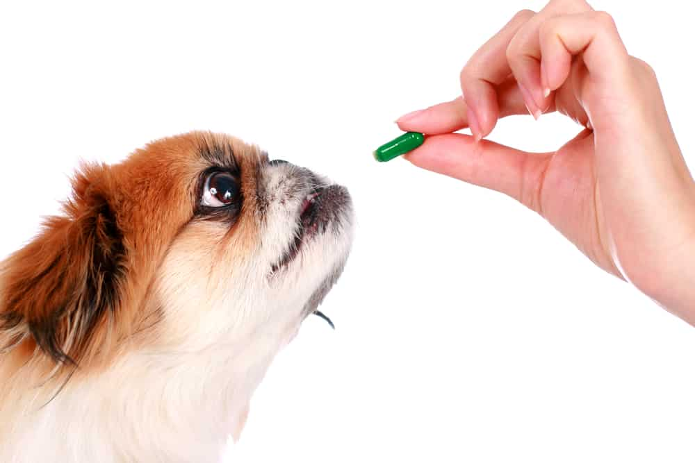 How to give dog liquid medicine in pill capsule