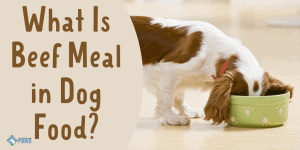 What Is Beef Meal in Dog Food