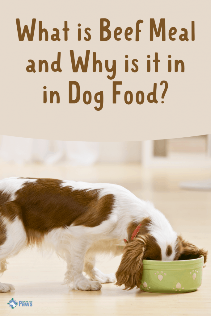 What Is Beef Meal in Dog Food - Pinterest