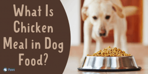What Is Chicken Meal in Dog Food