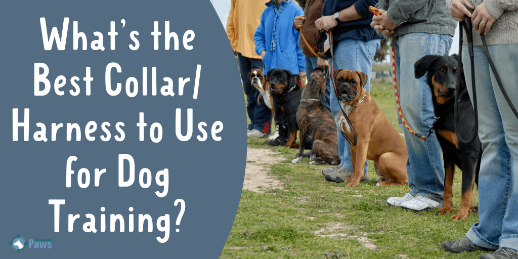 What's the Best Collar or Harness to Use for Dog Training