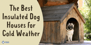 Best Insulated Dog Houses for Winter and Cold Weather