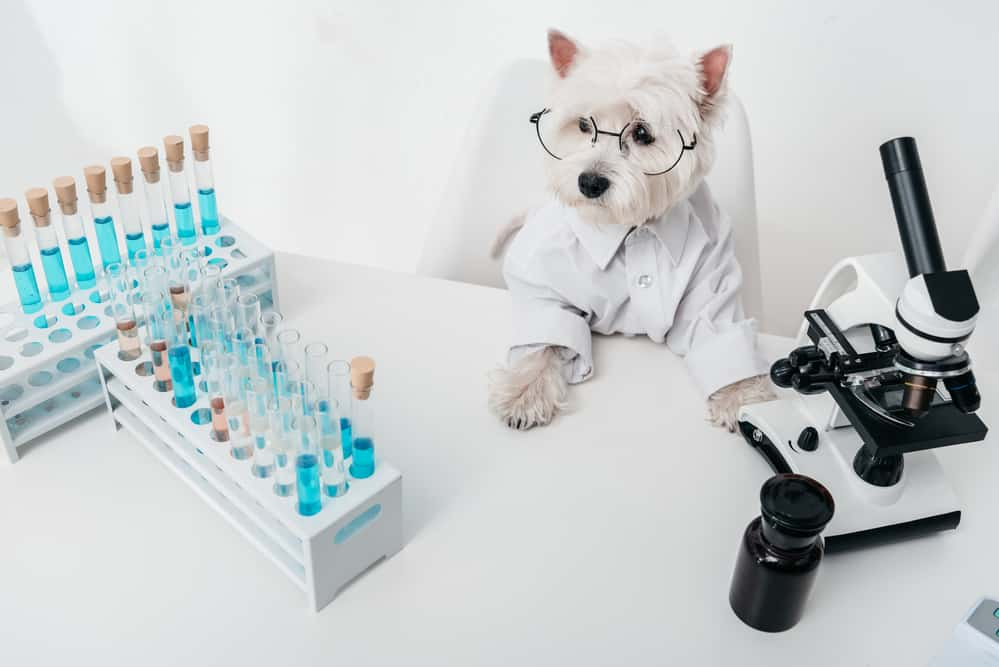 Does peroxide kill fleas safe for dogs how to use