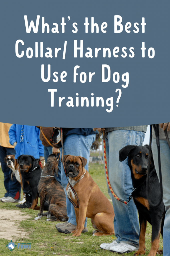 What's the Best Collar or Harness to Use When Training My Dog