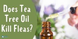 Does Tea Tree Oil Kill Fleas on Dogs