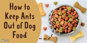 How to Keep Ants Out of Dog Food Easily