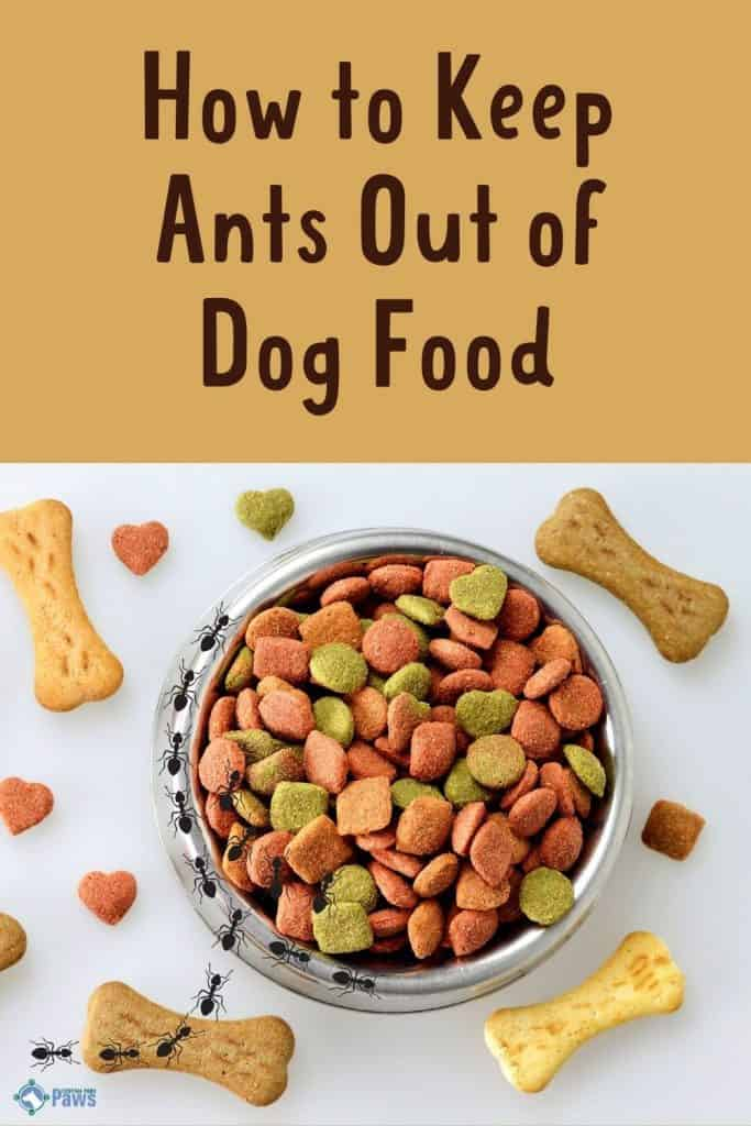 How to Keep Ants Out of Dog Food Easily - Pinterest